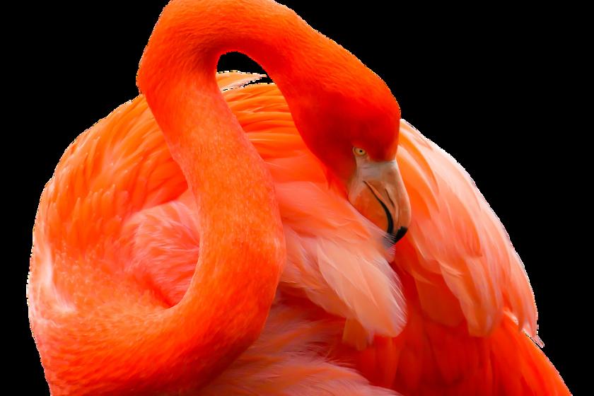 flamingo bettwäsche kaufen